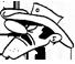 Extermination et capture de Ratons laveurs (Gestion parasitaire Dalton)